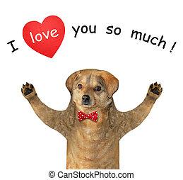 Dog beige in love