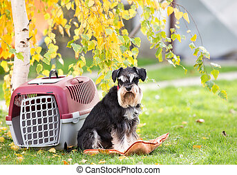 Dog beside carrier in park - Cute dog sitting on pillow...