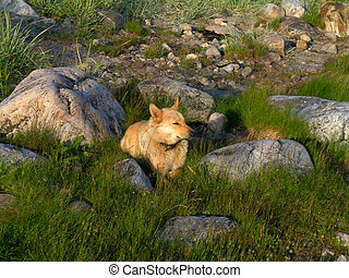 Dog between the stones