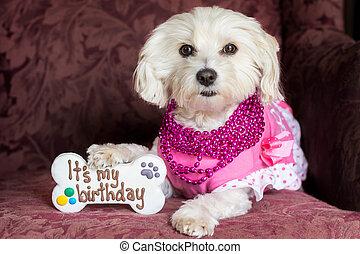 Dog birthday celebration