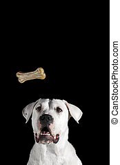 Dog Biscuit Bone