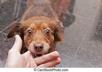dog biting a human hand