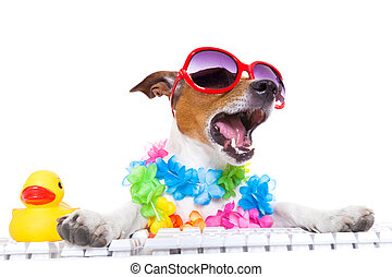 dog booking online - jack russell dog booking summer...
