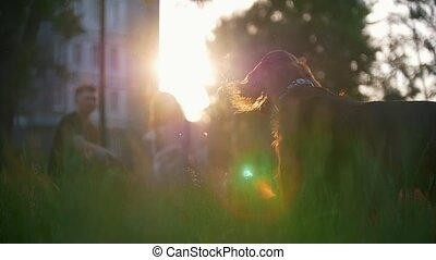 Dog breed irish setter looking around in front of young couple sitting on the grass at summer sunset