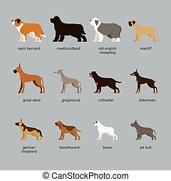Dog Breeds Set, Giant and Large Size - Side View, Vector ...