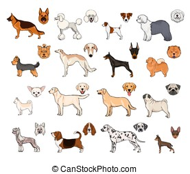 Dog breeds, side view and muzzle set. Collection with hand drawn colorful realistic illustration.