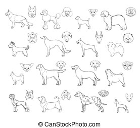 Dog breeds, side view and muzzle set. Collection with hand drawn contour realistic illustration.