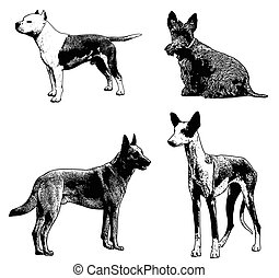 dog breeds sketch illustration