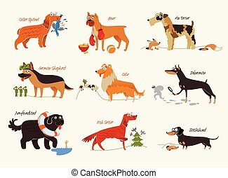 Dog breeds. Working dogs - Dog breeds. Cocker Spaniel,...