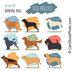 Dog breeds. Working (watching) dog set icon. Flat style....