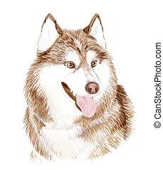 dog., brun, sibirsky, ou, museau, chien, sibérien, adulte, portait, husky, amical