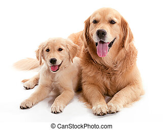 Two dogs laying together on the floor