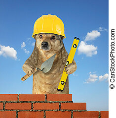 Dog builds the brick wall 2