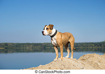 Dog by the lake looking into distance