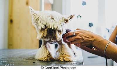dog care in the salon close-up