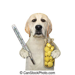 Dog carries thermometer and pills 2