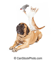 Dog Cat and Bird Playing - A playful cat standing on a large...