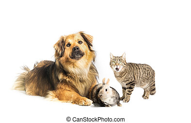 Dog, cat and rabbit in studio with white background