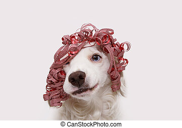 Dog celebrating birthday, new year or carnival party wearing a red ribbon present like wig and making a silly face. Isolated on white background.