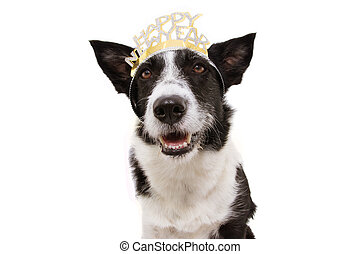 dog celebrating new year with a text sign diadem. Isolated on white background.