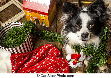 Dog Christmas cards