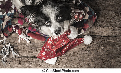 Dog Christmas postcard