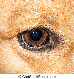 dog., close-up, olho