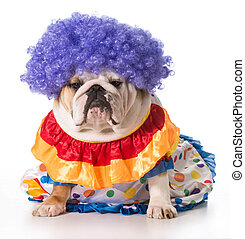dog clown