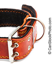 dog collar - Leather dog collar on a white background