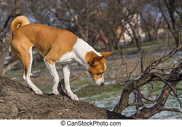 Dog come down from low level tree branch on its territory