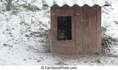 Dog comes out of kennel barking, cat enters the kennel...