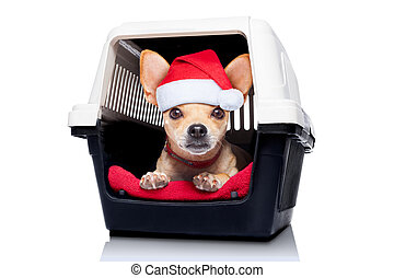 dog crate box - chihuahua dog inside a box or crate for...