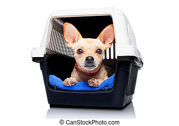 dog crate box - chihuahua dog inside a box or crate for ...