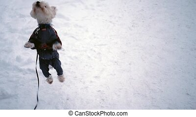 Dog cute jumping on the snow