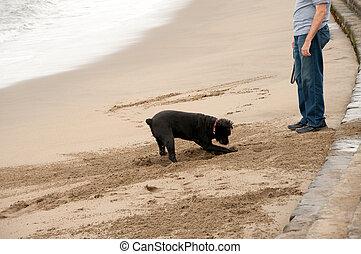 dog digging hole at owner\'s feet - walking the dog at san...