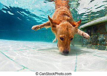 Dog diving underwater in swimming pool