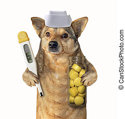Dog doctor with a thermometer