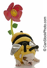 dog dressed as a bee with behind up to pollinate a flower