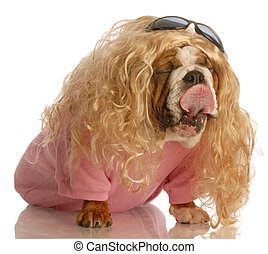 dog dressed as a girl