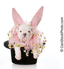 dog dressed as a rabbit - dog wearing bunny ears inside a...