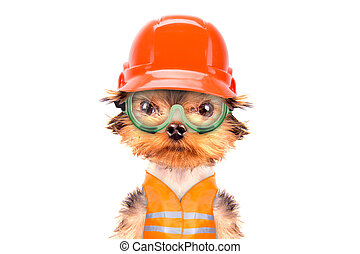 dog  dressed as builder isolated on a white background