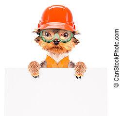 dog dressed as builder with banner - dog dressed as builder...