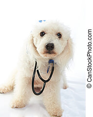 dog dressed as doctor