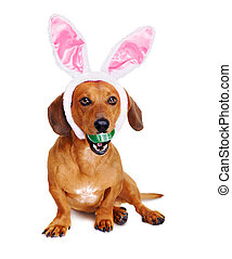 dog dressed as easter bunny  holding easter egg in teeth