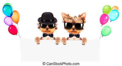 Dog dressed as mafia gangster with banner - Dog dressed as...
