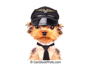 dog  dressed as pilot on a white background