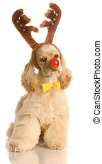 dog dressed as rudolph