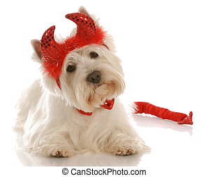 dog dressed up as a devil - west highland white terrier...