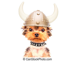 dog dressed up as a viking