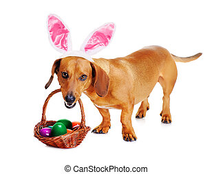 dog dressed up as bunny with easter basket